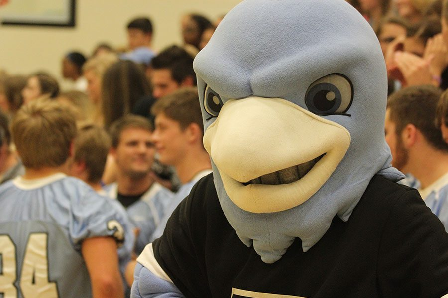 Boomer puts on his serious face in preparation for the Homecoming game against Laramie.