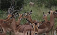 The Safari Diaries